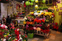 Carmen flora 2